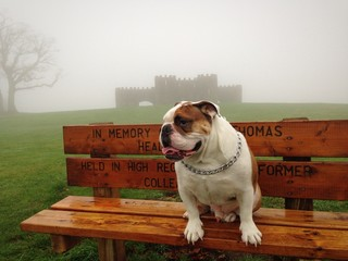 Rocco in the mist.