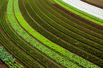cultivated land background with vegetable patches