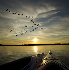 Kayaks at Sunset with Geese Landing