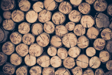 a pile of cut wood stump log texture