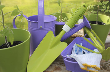 gardening tools and seedling