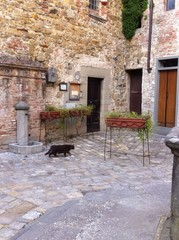 a black cat walking in an old tuscany village