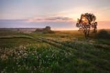 Sunrise in a rural field - 66941648