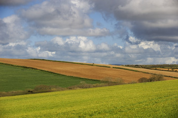 The Cornish countryside in summer.