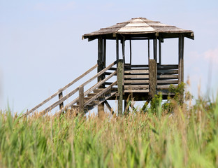 hut for bird watching and bird life in the midst of the reeds in