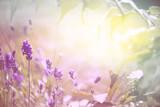 Fototapety Duftender Lavendel