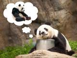 Verliebter Pandabär