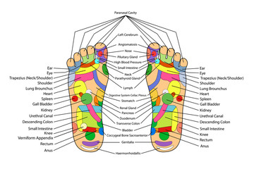 Acupuncture - Foot Scheme