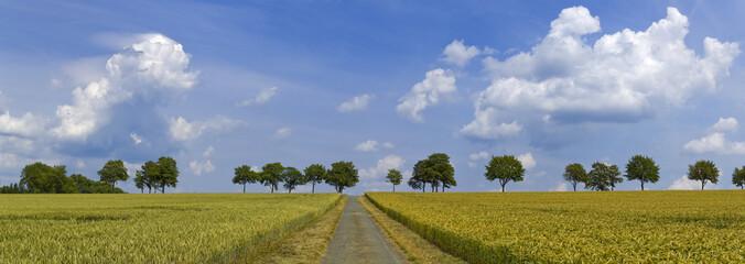 Baumallee Weg im Getreidefeld