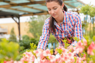 Garden center woman working in pink flowerbed