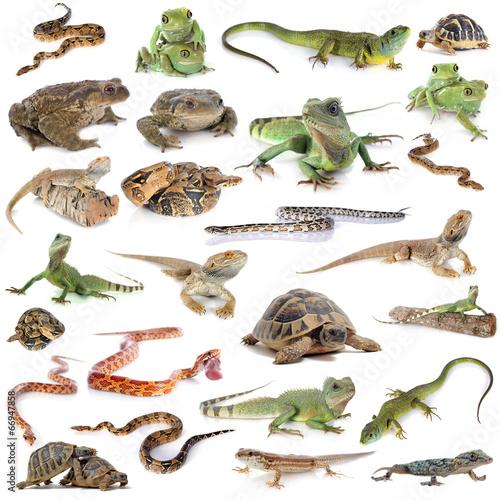 Foto op Plexiglas Kikker reptile and amphibian