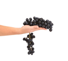 Hand holding grape bunch.