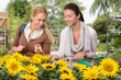 Two woman choose sunflowers in garden center