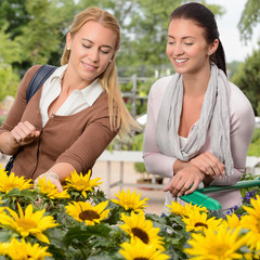 Two woman shopping for sunflowers garden center