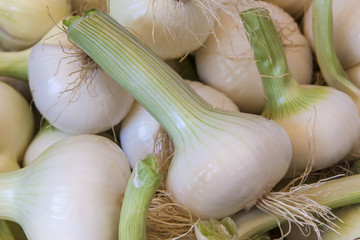 Young garlic on a market counter