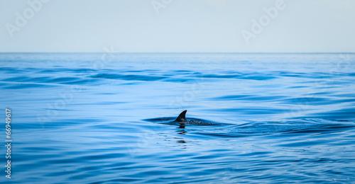 Poster Oceanië Fin of a shark