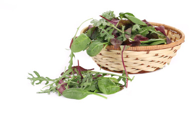 Green herbs mix in basket.
