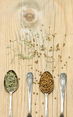 Coriander and rosemary spices in silver spoons