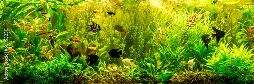 Ttropical freshwater aquarium with fishes - 66953230
