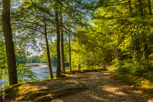 canvas print picture Forest Trail