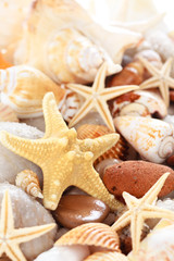 Seashells background.