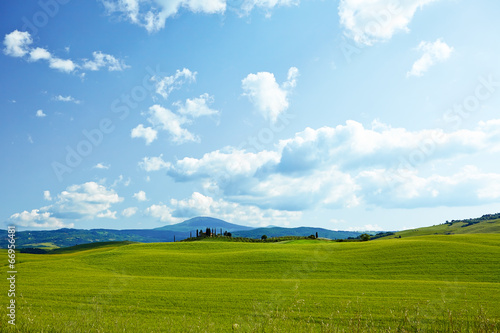 canvas print picture Green wheat on blue sky background