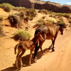 Wild Horses at Monument Valley