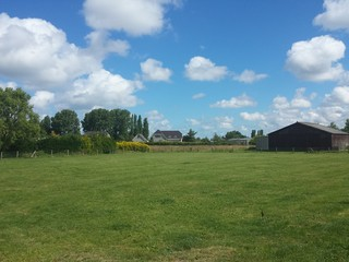 Dutch farm field