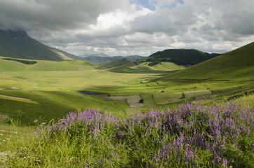 Paesaggio rurale con fiori viola