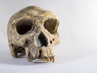 Reproducción de un cráneo de Homo Sapiens Sapiens