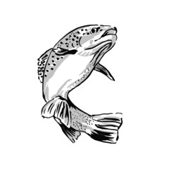 Drawing trout. Vector illustration
