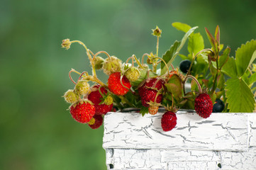 The bouquet of wild strawberry in basket