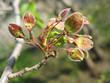 Spring. Close-up of elm catkins