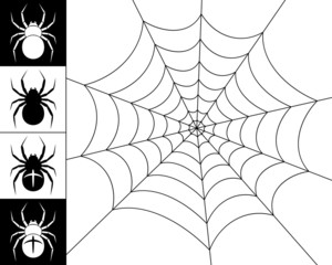 Spiders and web