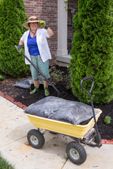 Senior woman working in the garden mulching