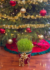 Christmas wheat under xmas tree