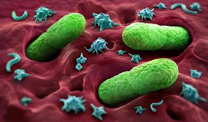 Eindringende Bakterien