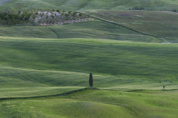 Stunning Landscape in Tuscany, Italy