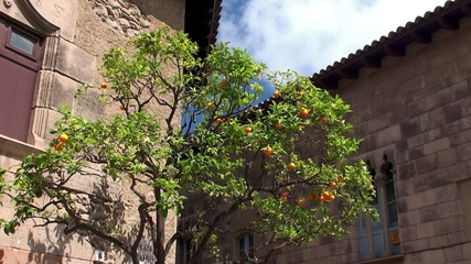 Orange tree with a fruit in the Spain village.