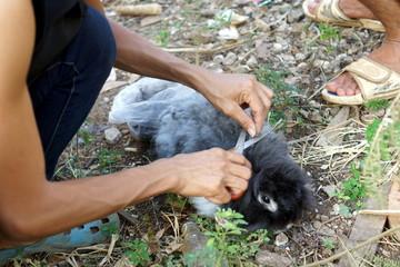Shearing a furry rabbit