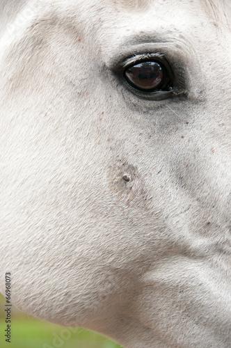 Fotobehang Paardrijden Sarcoid - Skin Tumour