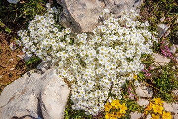 spontanea composizione di fiori sulle Mainarde