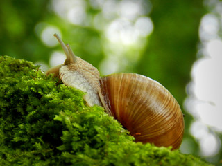 Snail on mosses