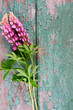 lupine over wooden background