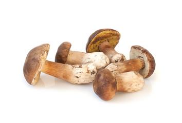 Wild mushrooms isolated on white background