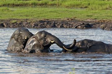 3 Elefanten baden