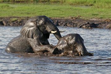 2 Elefanten spielen im Wasser