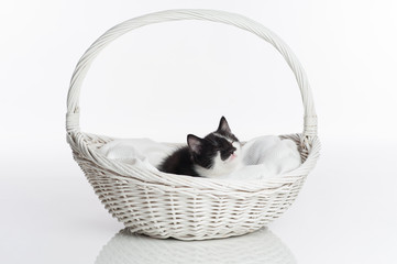 A Black and White Kitten in a White Basket