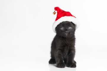 A Black Tabby Kitten Wearing a Red and White Santa Hat