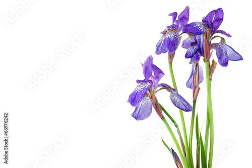 Spoed canvasdoek 2cm dik Iris Blue iris